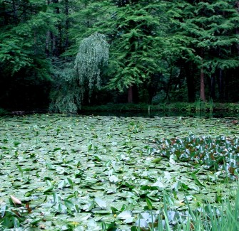 The Waterlily Reserve